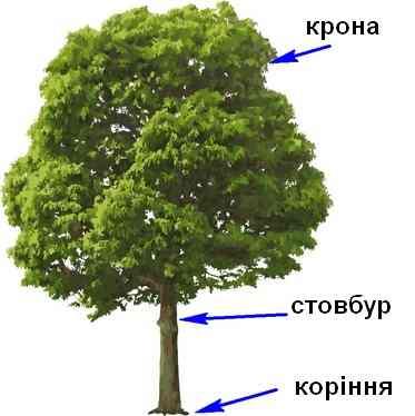 """Аналізуємо стовбур дерева. Діагностика """"Будинок-Дерево-Людина"""""""